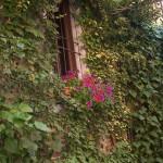 finestra osteria 1